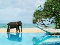 Лучшие отели Шри-Ланки 3, 4, 5 звезд: все включено, хорошие пляжи и аюрведа в комплекте!