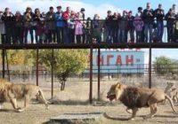 На сафари в Крым парк львов «Тайган»