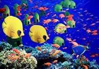 Богатый подводный мир Красного моря — фото с названиями рыб