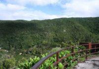Природный парк Анага в Тенерифе — фото, экскурсии