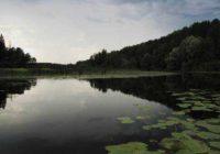 Лесная сказка: национальный парк «Марий Чодра»