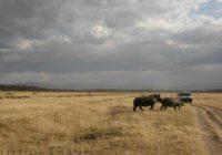 Дешевое и экстремальное путешествие в Африку