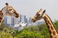 Какие животные живут в Австралии: фото с названиями и описанием