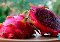Питайя фрукт, который надо попробовать в Тайланде