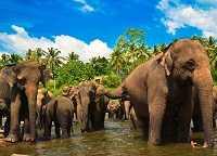 Погода на Шри-Ланке в мае — стоит ли отправляться в отпуск?