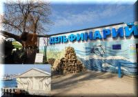 Дельфинарий в Артбухте: в мире дельфинов города Севастополь