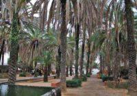 Сад пальм в Германии — лучший ботанический сад Европы