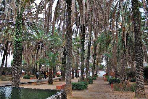 Сад пальм в Германии - лучший ботанический сад Европы