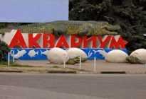 Алуштинский аквариум — мир подводных обитателей в центре курорта