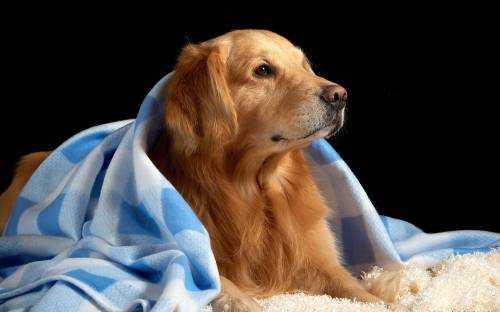 Простые советы для путешественников с собаками