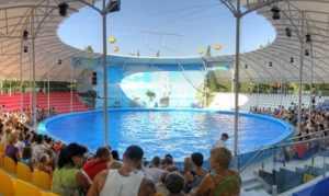 Дельфинарий «Немо»: развлекаемся с дельфинами в Алуште