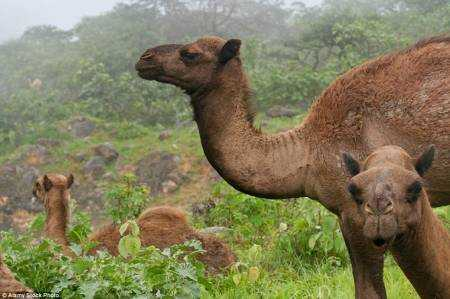 Как пустыня в Омане на три месяца перевоплощается в оазис